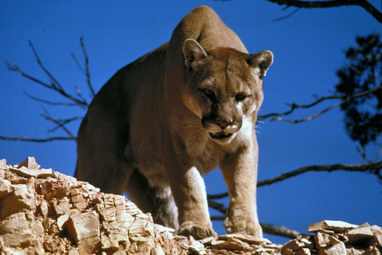 Animals in yellowstone